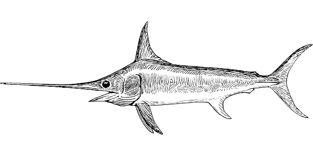 swordfish, fish, broadbill, broadbill swordfish, animal