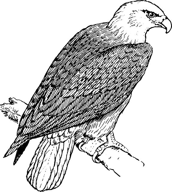 symbol, eagle, bird, branch, wings, tail, feathers