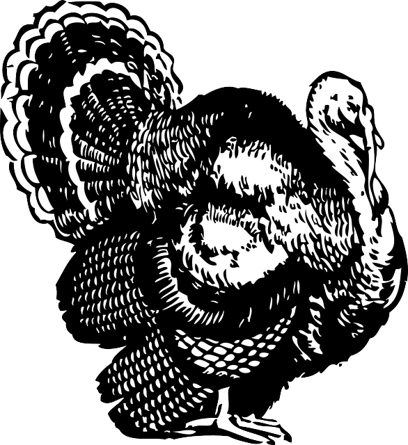thanksgiving, turkey, bird, animal, feathers, animals