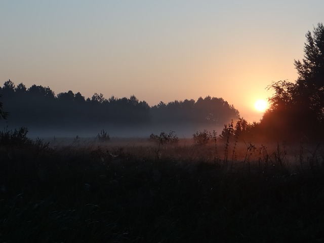 the fog, meadow, morning, landscape, at dawn, grass