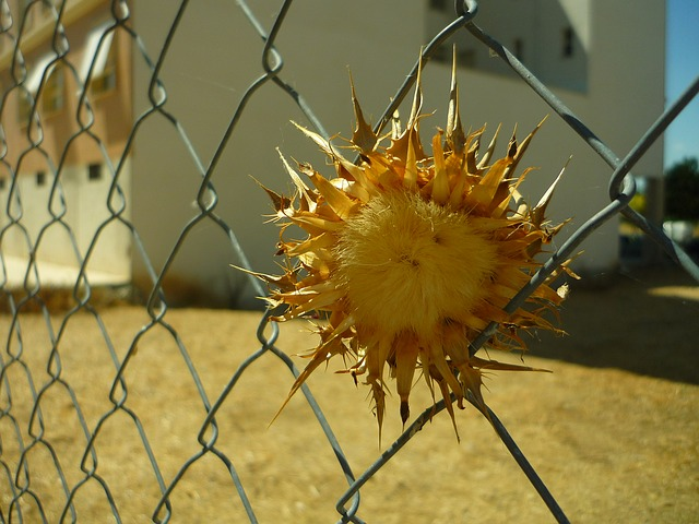 thistle, wired, dam, solar, locked up, skewers, thorns