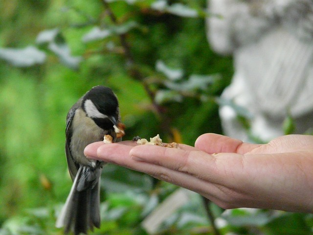 tit, bird, hand, food, feeding, bird feeding, bird seed