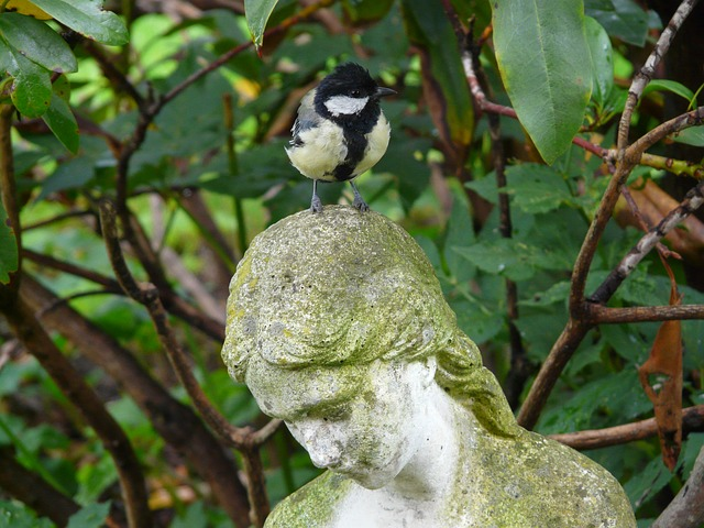 tit, parus major, fig, stone figure, madonna, sit, head