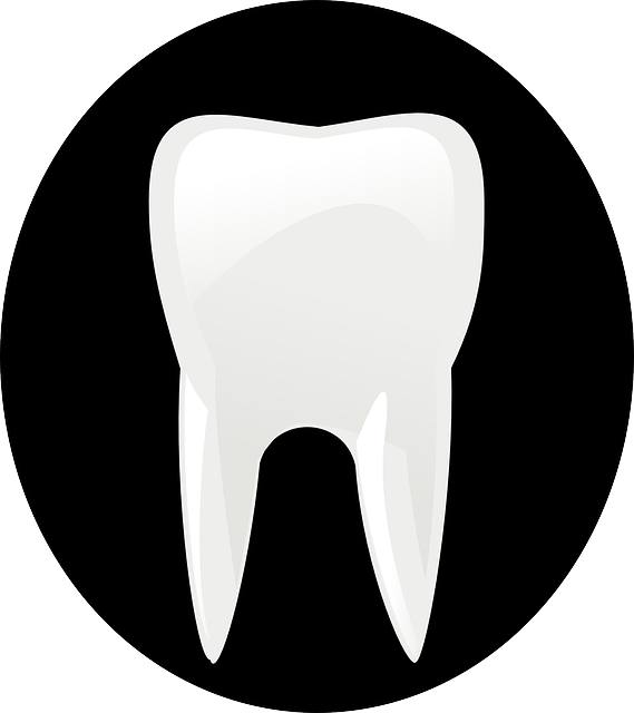 tooth, bite, dentist, practitioner, health