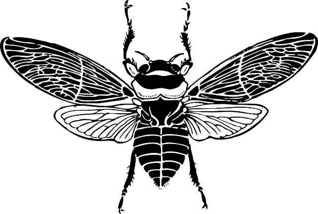 top, bee, wings, insect, honey, silhouette, bug, bees