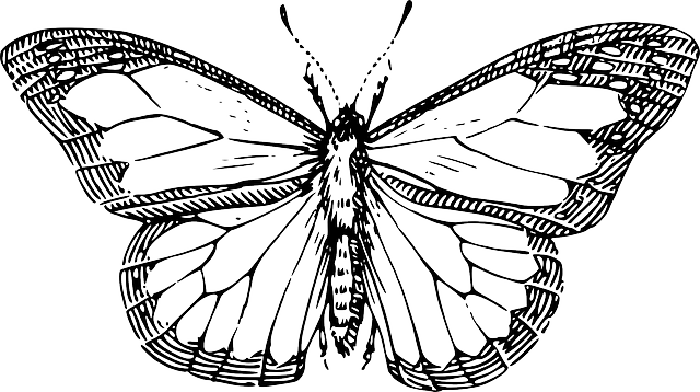 top, silhouette, cartoon, butterfly, wings, insect