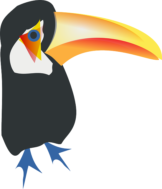 toucan, animal, bird