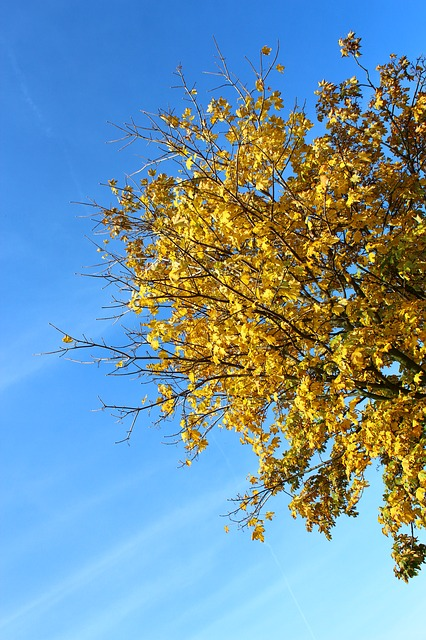 tree, autumn, leaves, yellow, bruise, fall color