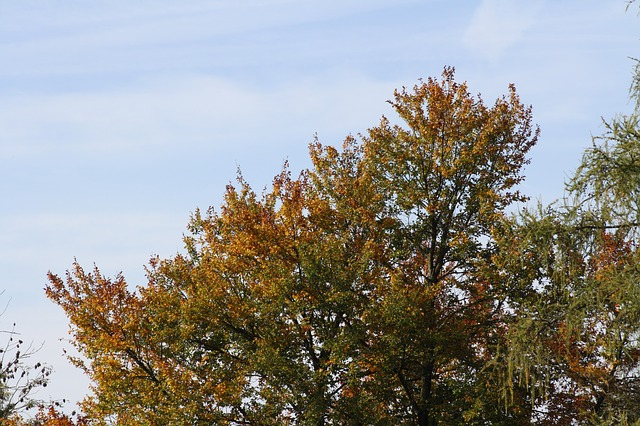 tree, autumn, sky, yellow