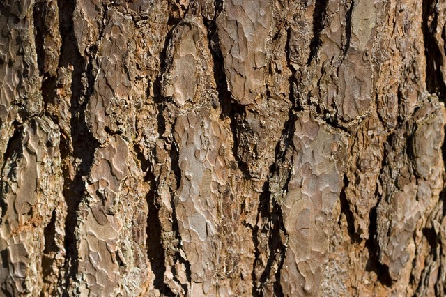 tree, bark, brown, texture, background, detail, macro