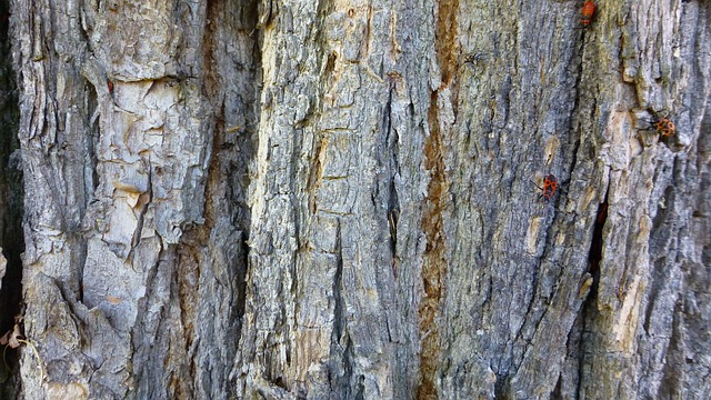 tree, bark, wood, structure, beetle