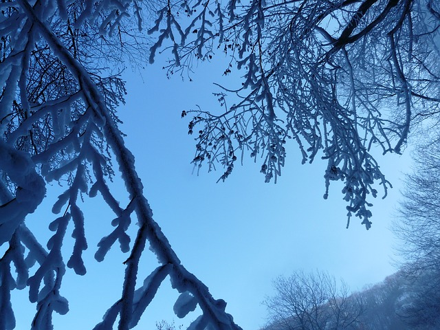 tree, branches, aesthetic, hoarfrost, iced, ice, winter