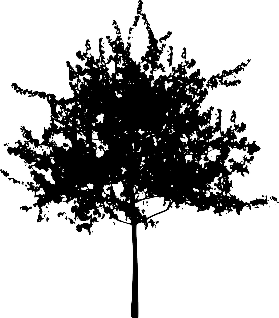 tree, bush, nature, leaves, trunk, silhouette