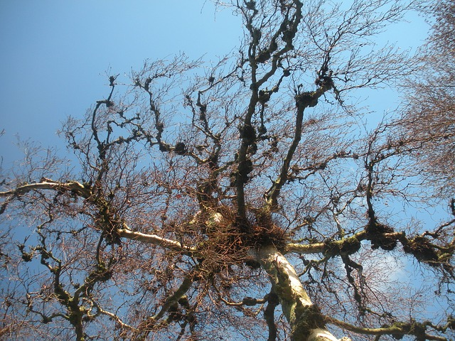 tree, detail, twigs, sky, blue, nature, winter