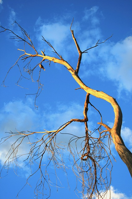tree, old, dead, dry, sun, bird, sky, blue