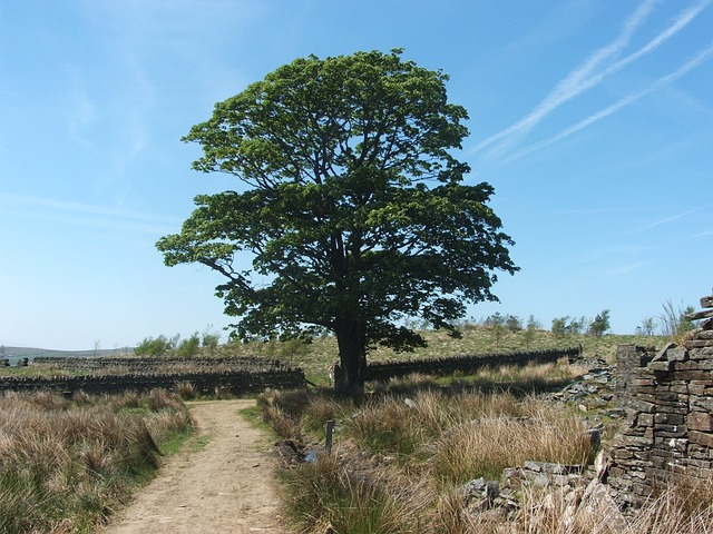 tree, path, fields, land, sky, blue, england, summer