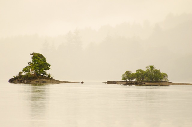 tree, trees, leaves, leaf, fog, island, weather