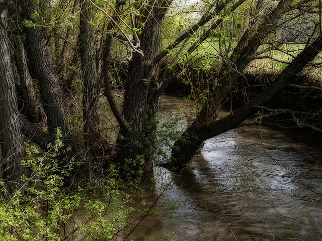 trees, creek, water, nature, scenery