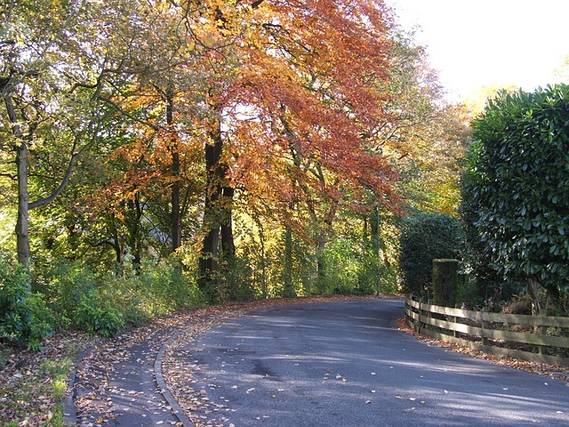 trees, tree, road, path, street, leaves, leaf, autumn