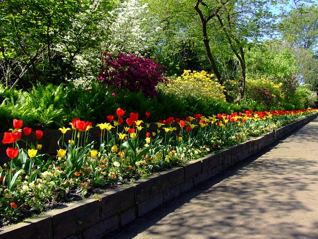 tulips, tulip bed, north park, düsseldorf, spring