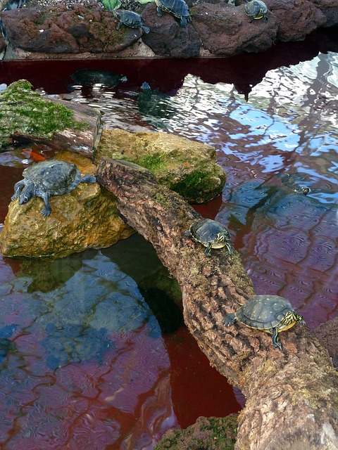 turtles, animals, water, nature