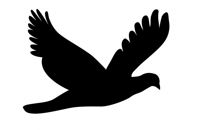 vector, flying, feathers, flying bird, wings, stylized