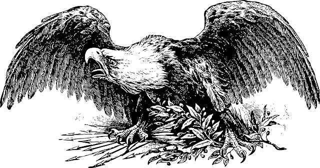 war, sketch, cartoon, eagle, bird, fly, flying, wild