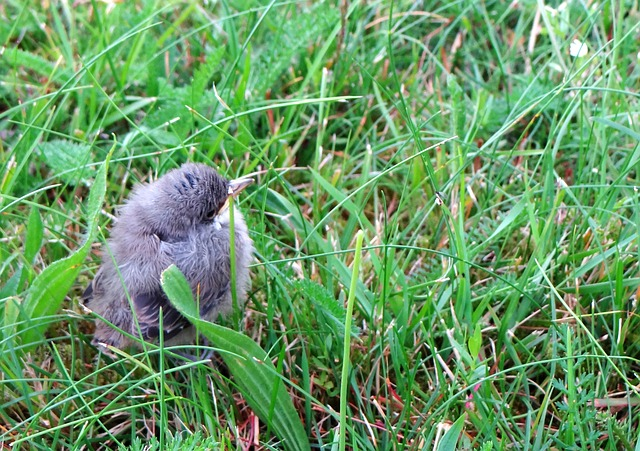 warbler, alone, small, bird, grass