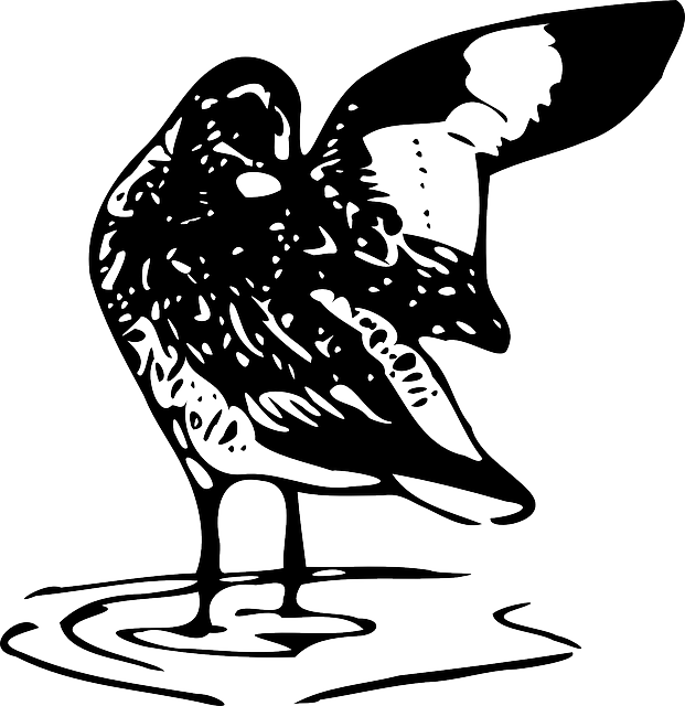 water, black, outline, bird, stand, wings, clean