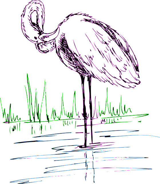 water, drawing, bird, grass, wings, art, flamingo