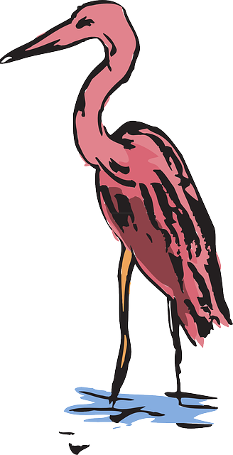 water, pink, wings, art, crane, feathers