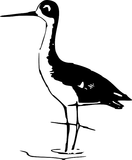 water, silhouette, bird, stand, stilt, standing, stilts