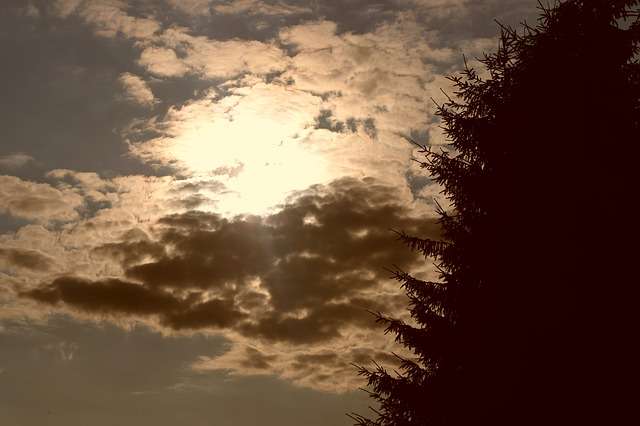 west, sun, the clouds, the persistence of the, trees