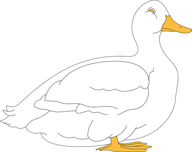 white, bird, duck, wings, animal, beak, feathers