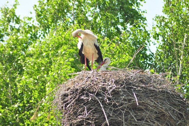 white stork, socket, village, bird
