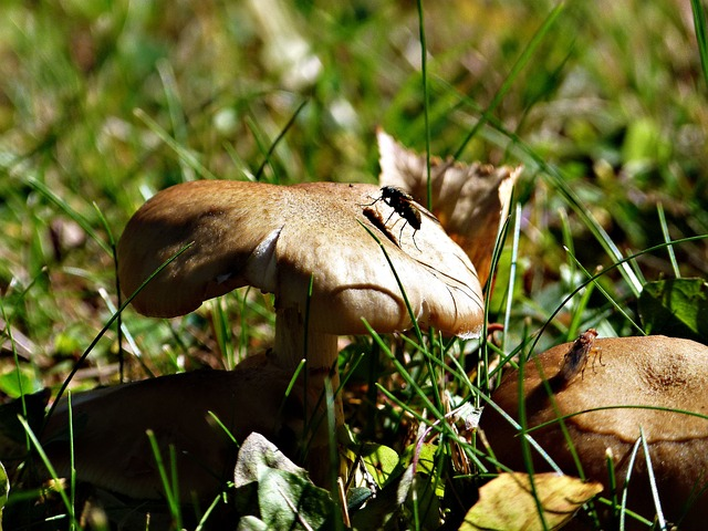wild, mushroom, flies, insects, nature, forest, meadow