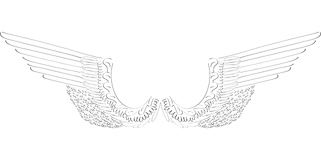 wings, angel, bird, feathers, flight, fly
