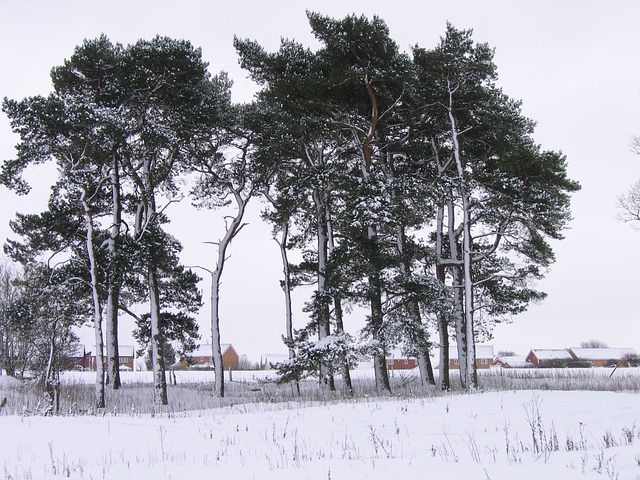 winter, snow, cold, wales, trees, stand