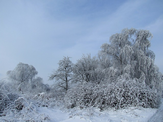 winter, snow, landscape, frost, cold, tree, white