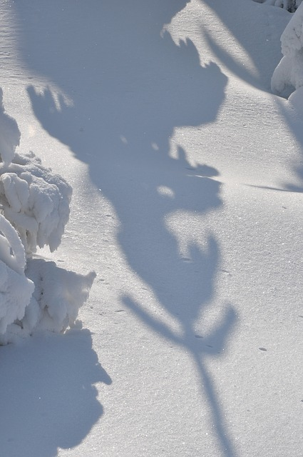 winter, snow, top, white, shadow, spruce, tree