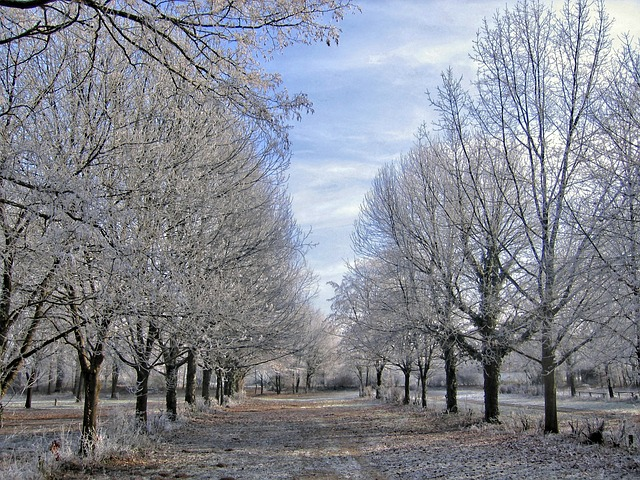 winter, trees, ice, snow, frost, cold, avenue, series