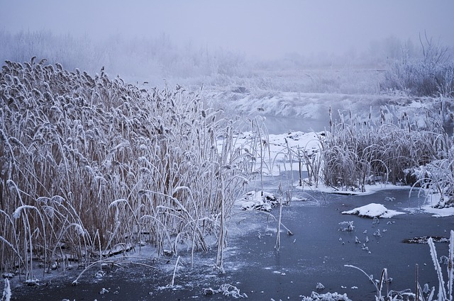 winter, water, trees, snow, vegetation, frost, fog