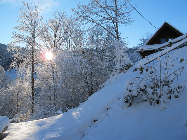 wintry, black forest, snow, cold, landscape, winter