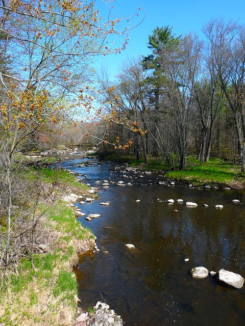 wisconsin, river, water, shoreline, sky, clouds, forest