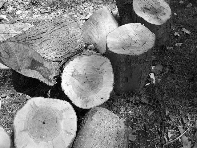 wood, logs, black, and, white, nature, still, life