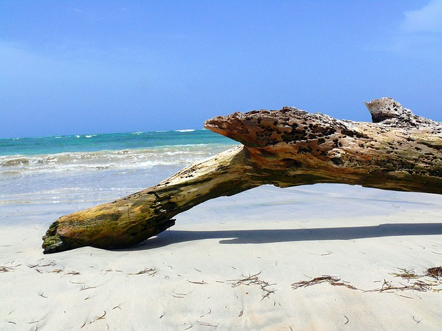 wood, the, beach, dominican, republic, exotic, hot