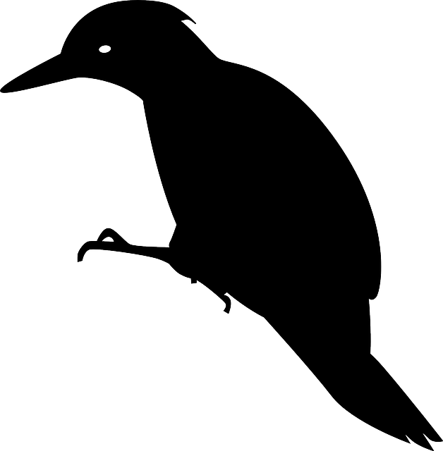 woodpecker, animal, bird, black, silhouette