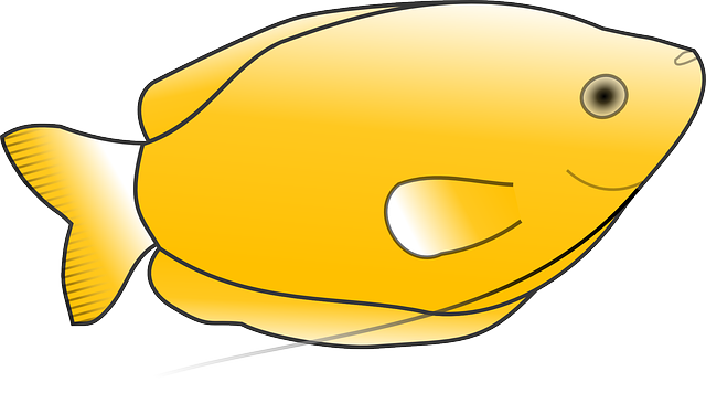 yellow, fish, scales, animal, tail, species, fins