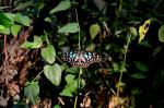 animals, animal, green, blue, closeup, view, butterfly