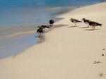 birds, sea, ave, animals, sand, beach, nature, creature